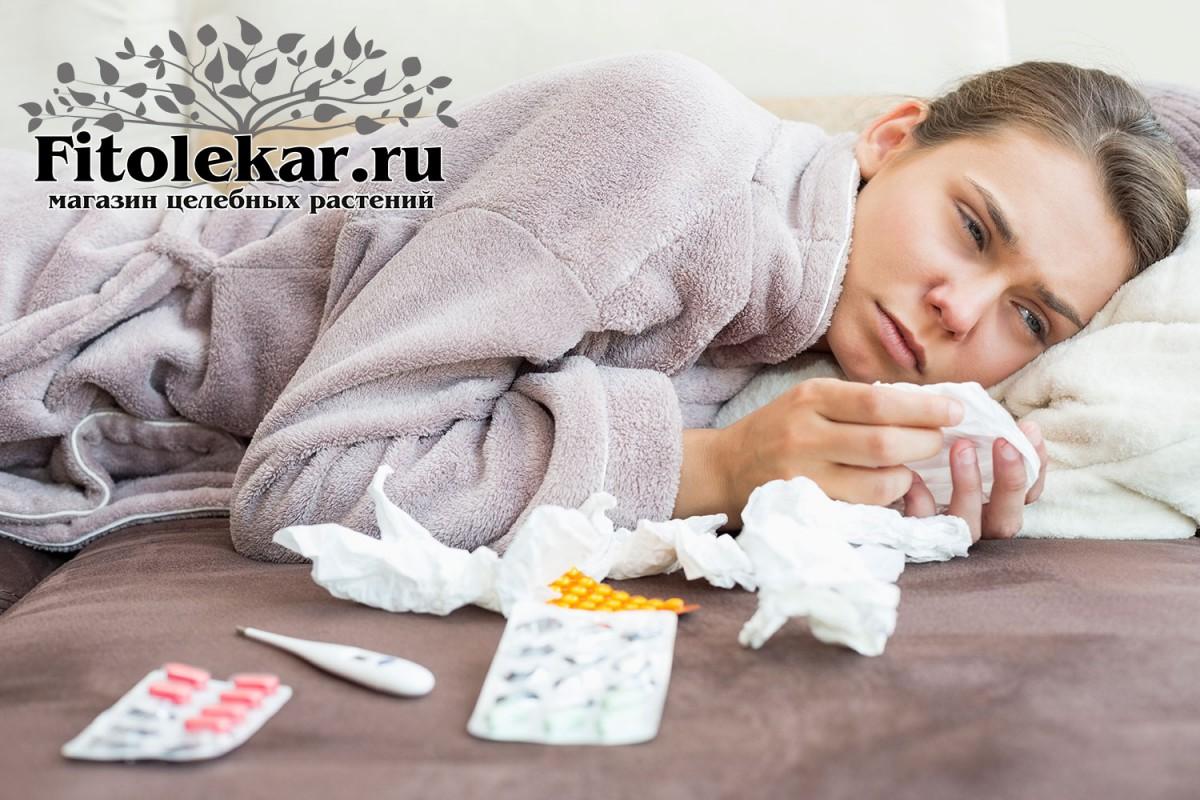 лечение простудных заболеваний, травы от простудных заболеваний, сборы трав от простудных заболеваний
